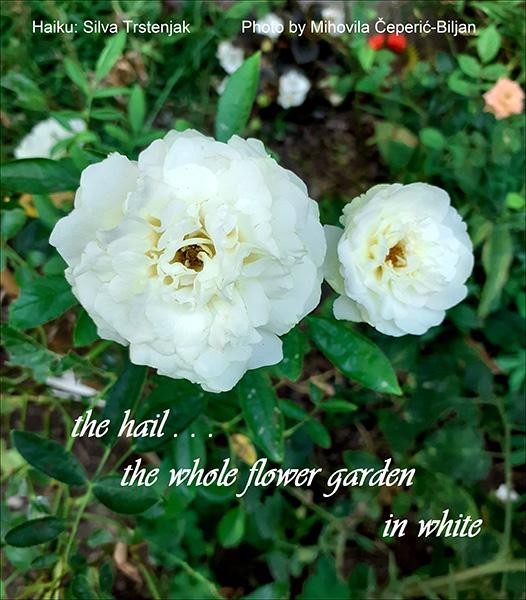 'the hail... / the whole flower garden / in white' by Silvia Trstenjak. Art by Mihovila Ceperic-Biljan