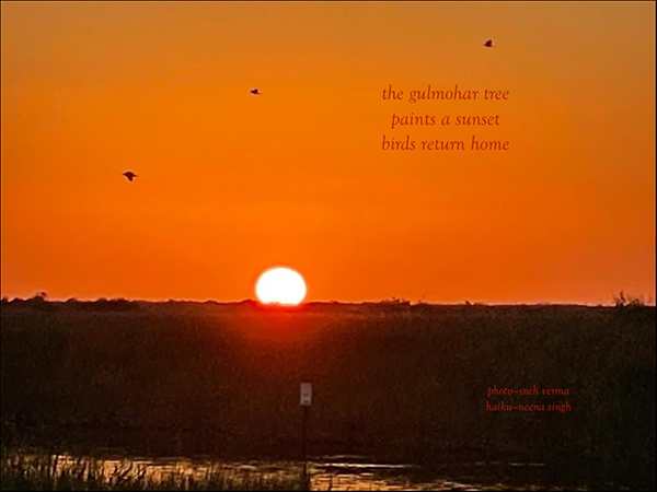 'the gulmohar tree / paints a sunset / birds return home' by Neena Singh