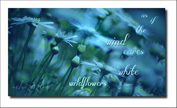 'as if the wind cares / white wildflowers' by Elisa Theriana