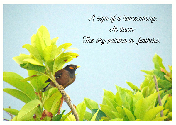 """""""a sign of a homecoming / at dawn— / the sky paited in feathers' by Shilpa Bharti (Rose)"""