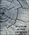 'in a stump / an inch / for my life' by Francis Masat. Haiku first published in  The Heron's Nest v6, December 2004