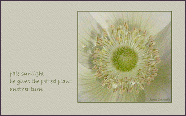 'pale sunlight / he gives the potted plant / another turn' by Susan Constable