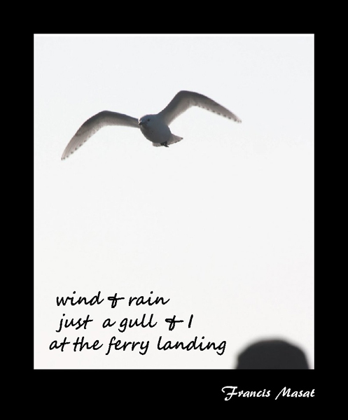 'wind and rain / just a gull and I / at the ferry landing' by Francis Masat. Haiku first published in Tiny Words 3:14, 2004.
