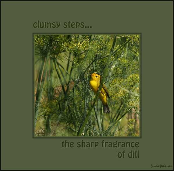 'clumsy steps / the sharp fragrance / of dill' by Linda Pilarski. Haiku first published in Acorn#23:Fall 2009