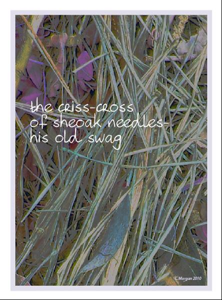 the criss-cross / of sheoak needles� / his old swag' by Carolyn Morgan