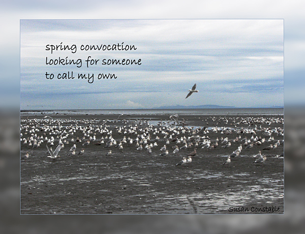 'spring convocation / looking for someone / to call my own' by Susan Constable