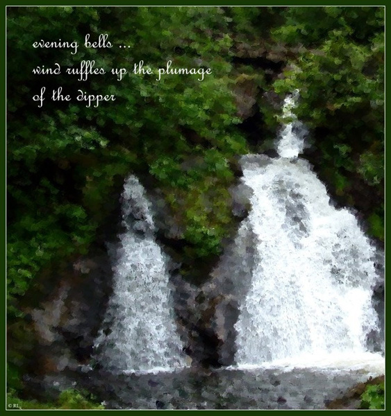 'evening bells... / wind ruffles up the plumage / of the dipper' by Ramona Linke