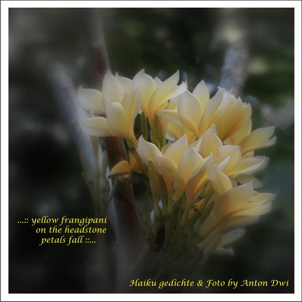 '...yellow frangipani / on the headstone / petals fall...' by Anton Dwi