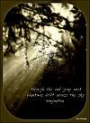 'through cool gray mist / phantoms drift across the sky / imagination' by Ann Roske.