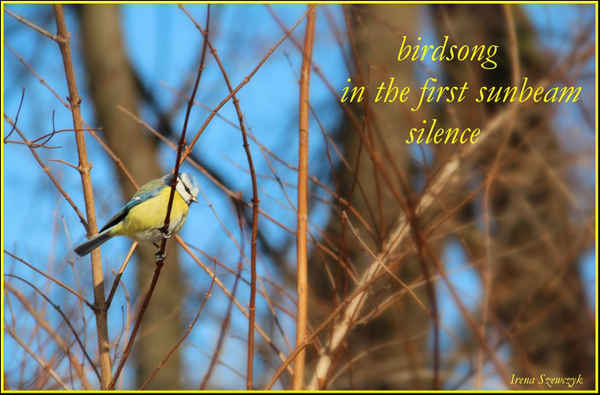 'birdsong / in the first sunbeam / silence' by Irena Szewczyk