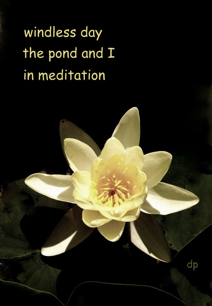 'windless day / the pond and I / in meditation' by Dorota Pyra.