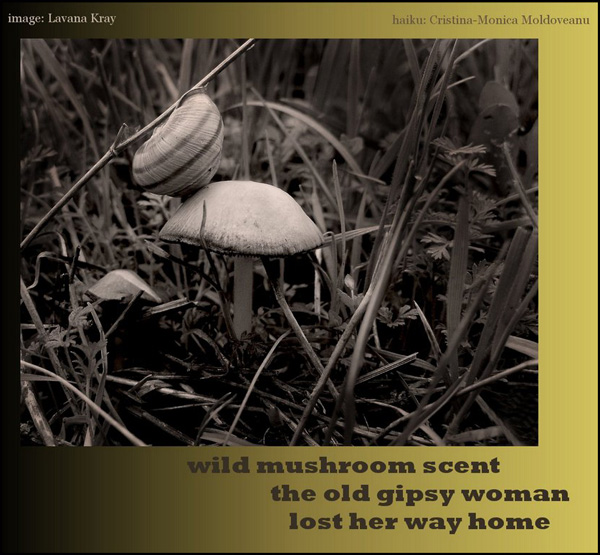 'wild mushroom scent / the old gipsy woman / lost her way home' by Cristina-Monica Moldoveanu